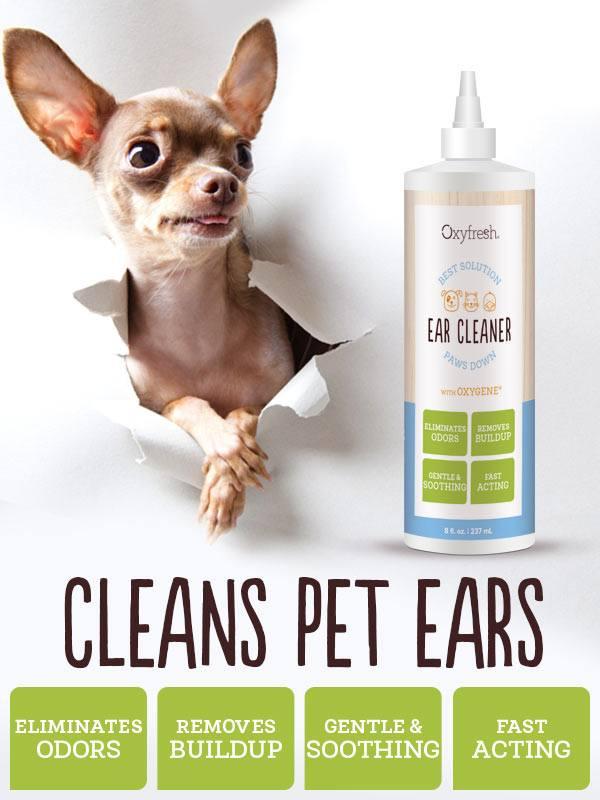 hondenoren reinigen