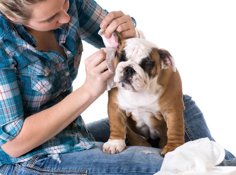 oren hond schoonmaken